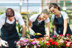 Gardeners working. Group of young gardeners working inside greenhouse Royalty Free Stock Images