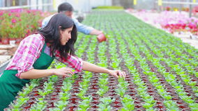 Gardeners working at the greenhouse Royalty Free Stock Photos