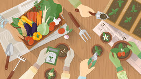 Gardeners working together. Gardeners hands working together on a wooden table top view with gardening tools, they are planting seeds and plants and carrying a stock illustration