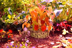 Gardenflowers Fotografie Stock Libere da Diritti