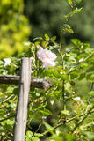 Gardenflowers Stock Afbeeldingen