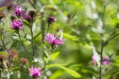 Gardenflowers Στοκ Εικόνα