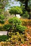 gardeni n tropiska thailand royaltyfria bilder