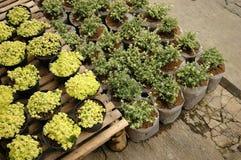 Gardenia flower Stock Photo