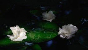 Gardenia flower a genus of flowering plants in the coffee family