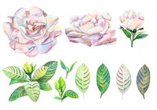 Gardenia flowers and leaves set watercolor handwork isolated on white background