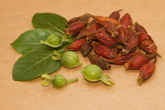 Gardenia Fruit, medicina di erbe cinese Fotografia Stock
