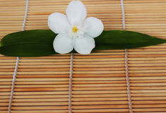 Gardenia white flowers placed on brown weave bamboo as backgroun Royalty Free Stock Image