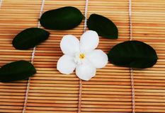 Gardenia white flowers placed on brown weave bamboo as backgroun Royalty Free Stock Photography