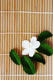 Gardenia white flowers placed on brown weave bamboo as backgroun Stock Photography