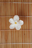 Gardenia white flowers placed on brown weave bamboo as backgroun. D Stock Images