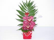 Gardenias εγκαταστάσεων Στοκ φωτογραφία με δικαίωμα ελεύθερης χρήσης