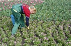 Gardenig da mulher Imagens de Stock Royalty Free