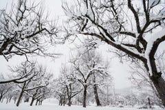 Gardenin vinter Royaltyfria Bilder