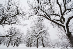 Garden in winter Royalty Free Stock Images