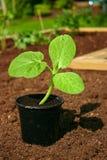 Gardening - 09 Stock Images