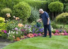 Gardening. View of a senior male watering the flower garden Royalty Free Stock Image