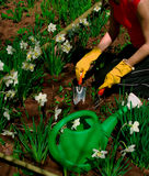 Gardening. Woman is working in garden/ She is making flower bed stock image