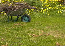 Gardening. Spring cleaning in the garden, wheelbarrow full of twigs, with a dandelion background Royalty Free Stock Images
