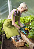 Gardening. Young woman gardening in glasshouse close up Royalty Free Stock Photo