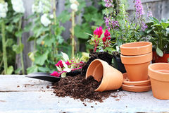 Gardening. Rustic table with flower pots, potting soil, trowel and plants in front of an old weathered gardening shed Stock Photos