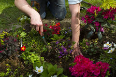 Gardening. Man digging in flower bed Stock Photos