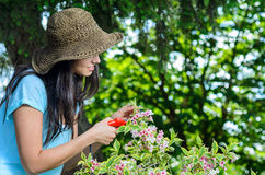 Gardening. Young woman gardening and caring for plants in summer Royalty Free Stock Images