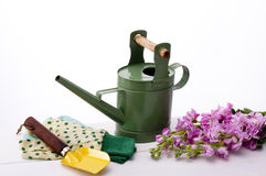Gardening. Pink stock flower and watering can Stock Photos
