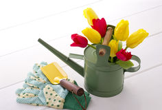 Gardening. Red and yellow tulip in watering can and globe and shovel Royalty Free Stock Image