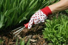 Gardening Stock Image