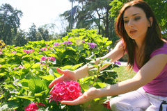 Gardening. A young woman holding an Ortensia flower in her garden Royalty Free Stock Photography