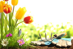 Gardening. Garden tools,green grass and flowers Royalty Free Stock Photos