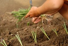 Free Gardening Stock Image - 2965251