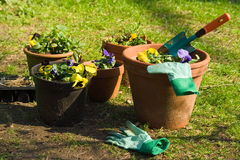 Gardening royalty free stock photography