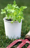 Gardening. Young plant and gardening tool - gardening concept Royalty Free Stock Images