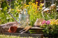 Free Gardening Stock Image - 49867541