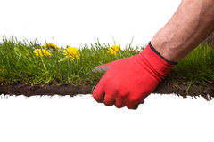 Gardening. Holding a piece of grass, metaphor for gardening or creating a garden Royalty Free Stock Image