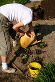 Gardening. Planting new plants in the vegetable garden Royalty Free Stock Photography