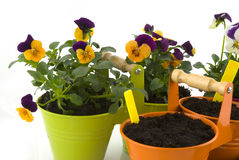 Gardening. With violins and seed Stock Image
