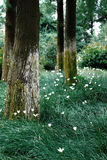 Gardening. The little flowers,green grass and the trees constitute  beautiful Gardens Stock Photos