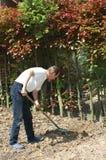 Gardening. Stock Photo