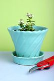 Gardening. Simple still life of pot with plant and garden pruners; fresh, modern color scheme; plant is a hebe; spring or summer royalty free stock photo