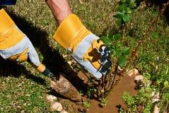 Gardening. A man's hands doing a garden work Stock Photo