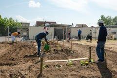Gardening activities in a German refugee camp Stock Photos