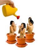 Gardening addiction - growing women Stock Image