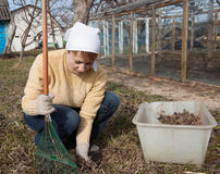 Gardening, agriculture concept Stock Image