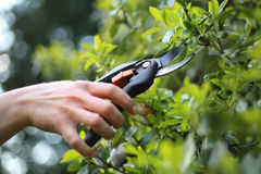Gardening And Horticulture Stock Photos