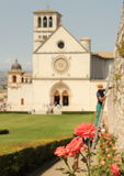 Gardening in Assisi. Pink roses and gardener outside Basilica di San Francesco d'Assisi, Umbria, Italy Stock Photos