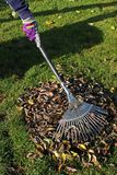 Gardening in autumn Royalty Free Stock Photo
