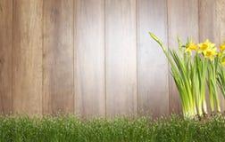 Gardening background Royalty Free Stock Image